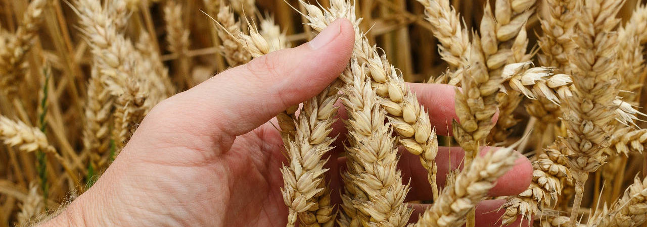 Hydra for cereals and seeds - Caronte Consulting